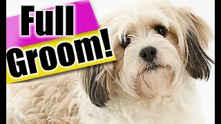 How to Groom a Cavachon Dog from START to FINISH! Exact dog grooming steps for a BEGINNER!