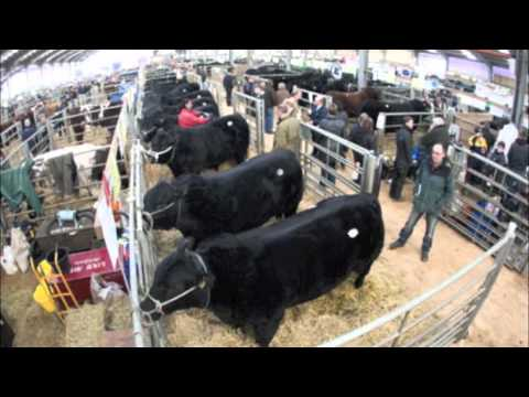 Perth Bull Sales 2012 Aberdeen Angus top price