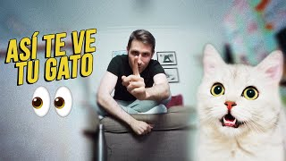 ¿Cómo te ve tu gato?  | Los ojos de los felinos no funcionan como creías