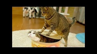 Funny Animals Doing Funny Things 2018