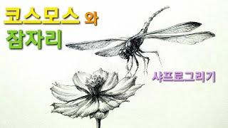 연필30분드로잉/코스모스꽃잎과 잠자리/샤프로그리기