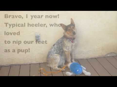 How to Train Puppy Not to Bite Your Feet & Heels