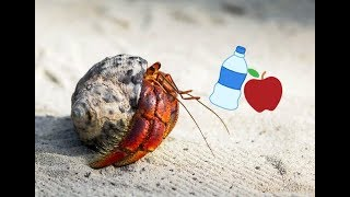 Why Your Hermit Crab isn't Eating or Drinking
