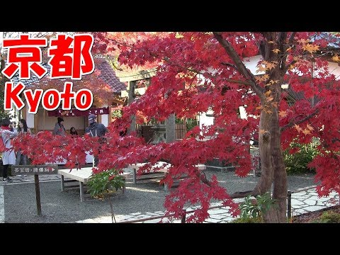 京都観光 Sightseeing in Kyoto