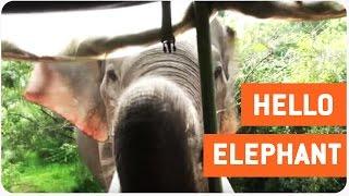 Curious Elephant Says Hello to Freaked Tourists