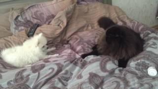 Мои домашние животные кот Сима и собака Снежок
