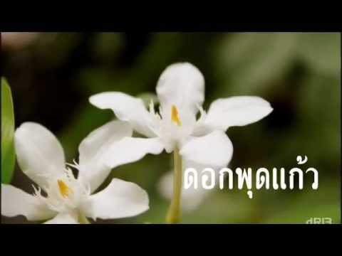 ดอกไม้ประจำชาติอาเซียน BY MARK