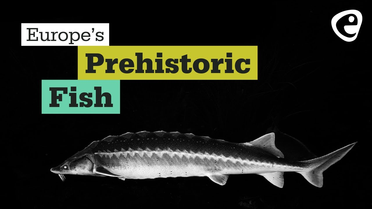 Europe's Prehistoric Fish