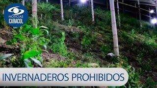 Le apagan la luz a invernaderos de marihuana en Cauca | Noticias Caracol