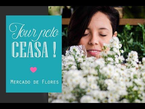 Tour pelo Ceasa - Flores pra decoração do seu casamento ♥
