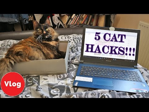 5-cat-life-hacks-every-cat-owner-should-know!-simple-life-hacks-for-cats-and-cat-owners
