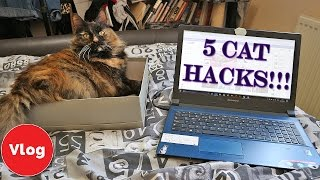 5 cat hacks every cat owner should know simple life hacks hacks for cats and cat owners