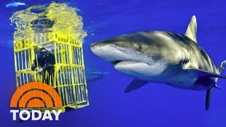 Jenna Bush Hager Tracks And Tag Great White Sharks | TODAY