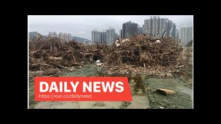 Daily News - 7,000 tons of trees fell in the storm ended at the Tuen Mun dump