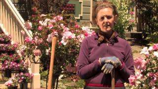 How to Care for a Flower Bed : More Gardening Advice