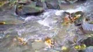 October morning interlude:Fly fishing for native brook trout