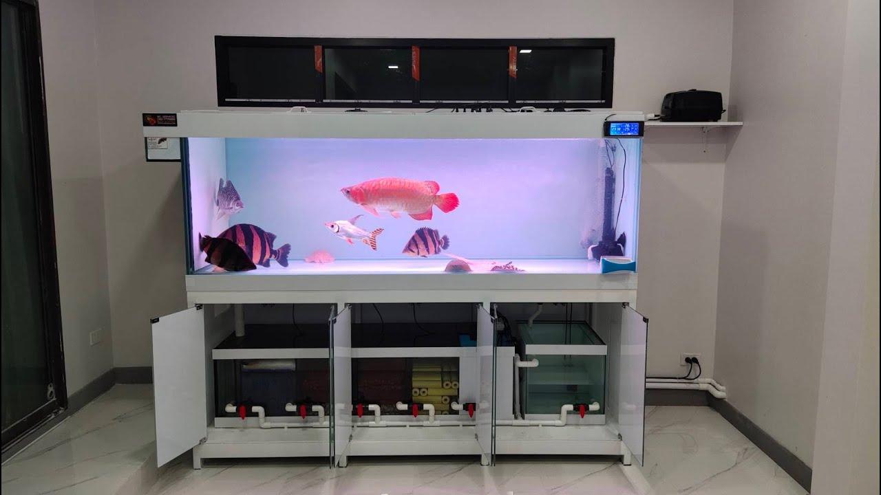 """์ีNutty Professor : ย้ายตู้ปลา 84"""" ภายในบ้าน + ทำระบบ O4FS พร้อมลงปลาวันเดียวจบ (มีแดงใหญ่สุดสวย) 4"""