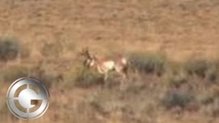 715 Yard Muzzleloader Antelope Kill Shot - Long Range Hunting