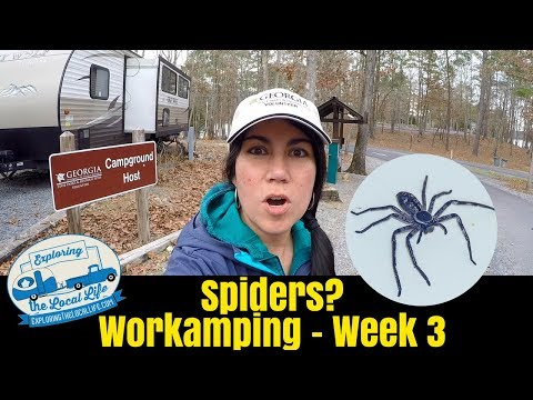 Hate Spiders? Then DON'T Become a Campground Host!! Frugal Travel Trailer Living