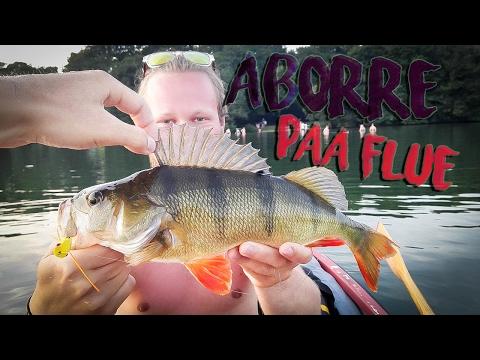 ABORRE PÅ FLUE - Popperfiskeri (Bass, Perch, Barsch)