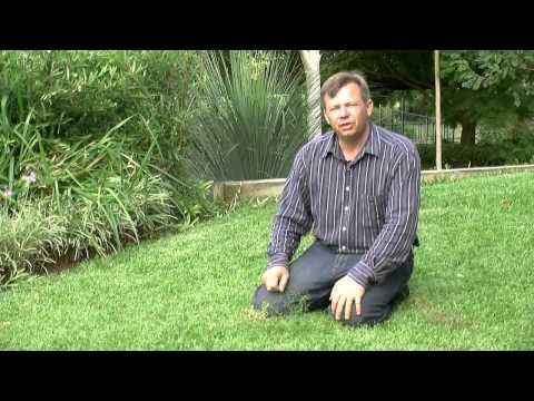 Killing And Keeping Weeds Out Of Your Lawn