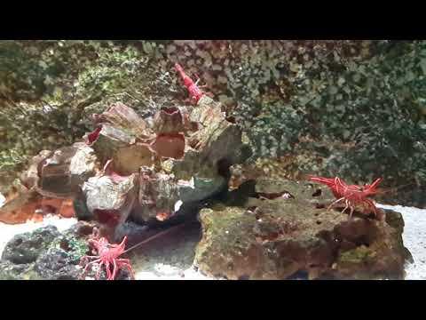 Siam Ocean World ปลาเยอะมาก 1
