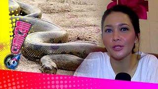 Ular-ular Misterius di Rumah Maia - Cumicam