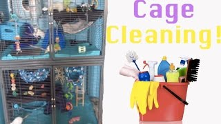How I Clean My Rat Cage