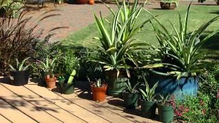 Garden Tips for September
