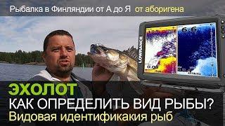 как определить вид рыбы на эхолоте? Видовая идентификация рыб