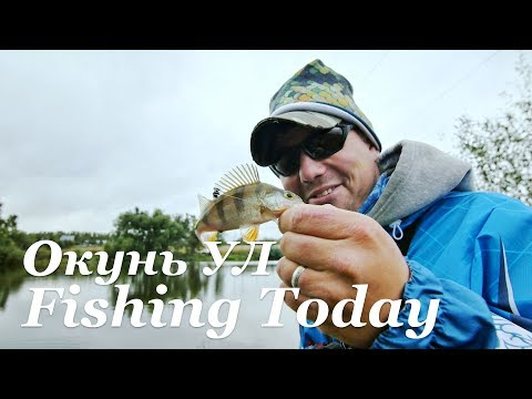 УЛ окунь - приманки, снасть, тактика ловли - Fishing Today