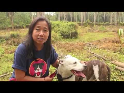 Laguna Pit Bulls Message to Cesar Millan