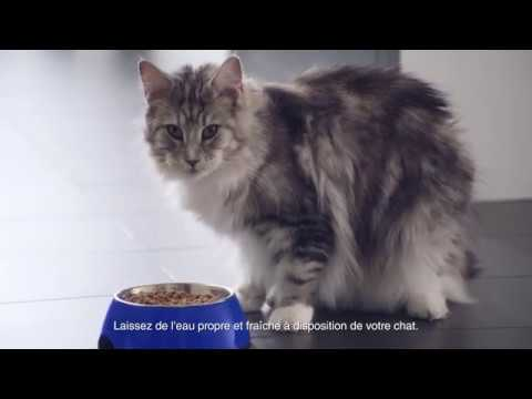 Purina One Chat LIGHT - GAIA