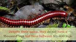 15 Interesting Facts You Should Know About Millipede
