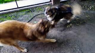 DOGVLOG : МАТЬ и СЫН (Дого-мать Рекса) Говорящая собака Рекса
