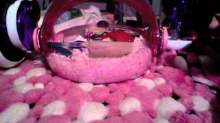 updated hamster cage tour new channel