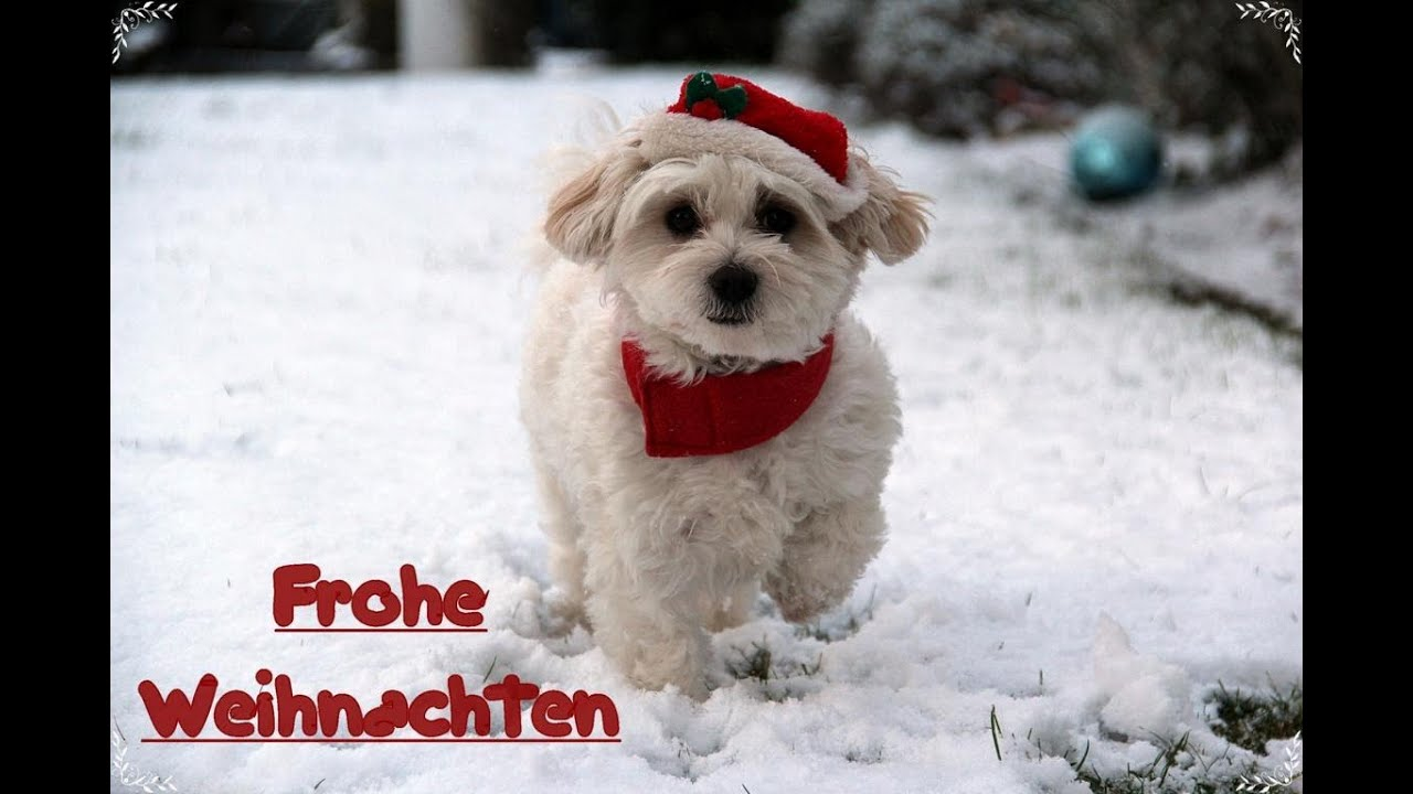 holly hund als weihnachtsmann youtube