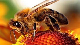 Пчелиный подмор рецепты!