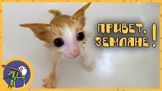 Купаем котеночка Мими