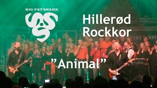 Animal - Big Fat Snake & Hillerød Rockkor