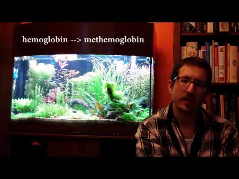 Chlorine And Chloramine In Your Aquarium: Toxicity (pt2)