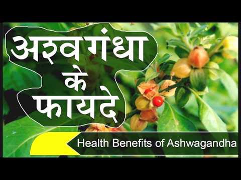 HEALTH Benefits of ASHWAGANDHA Powder-Indian Ginseng अश्वगंधा के चमत्कारी फायदे