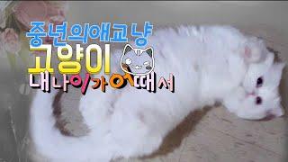 [까까캔디] 마중냥  집사껌딱지  집사 기다리는 냥이  집에 들어가기 싫다는 고양이