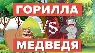 Горилла против Медведя - кто победит? - Сравнение животных