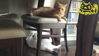 弟妹と遊んであげている「ひろし」。 弟のほうは無意識で尻尾が遊んでく...