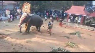 Elephant attack kerala thrissur thiruvthra Temple