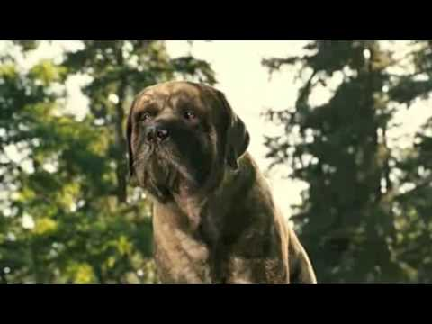 Dog Buster Movie