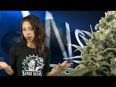 Marihuana Television News 14 - GanjaTime Madrid 2013