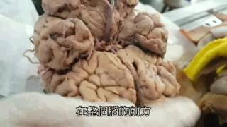 解剖第五組影片