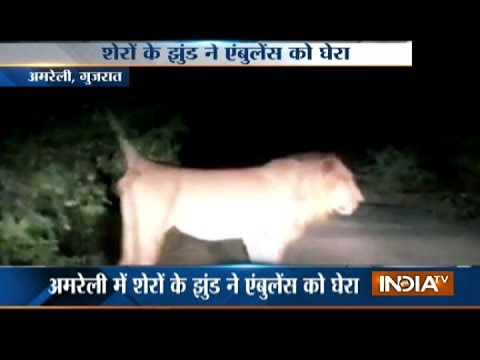 Woman delivers baby in ambulance surrounded by lions in Amreli, Gujarat